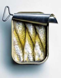 v_7_ill_842370_sardine